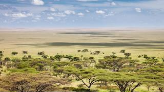 picture of Serengeti