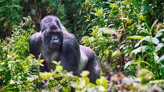 picture of Virunga National Park