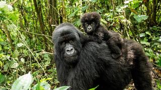 picture of Mgahinga Gorilla National Park