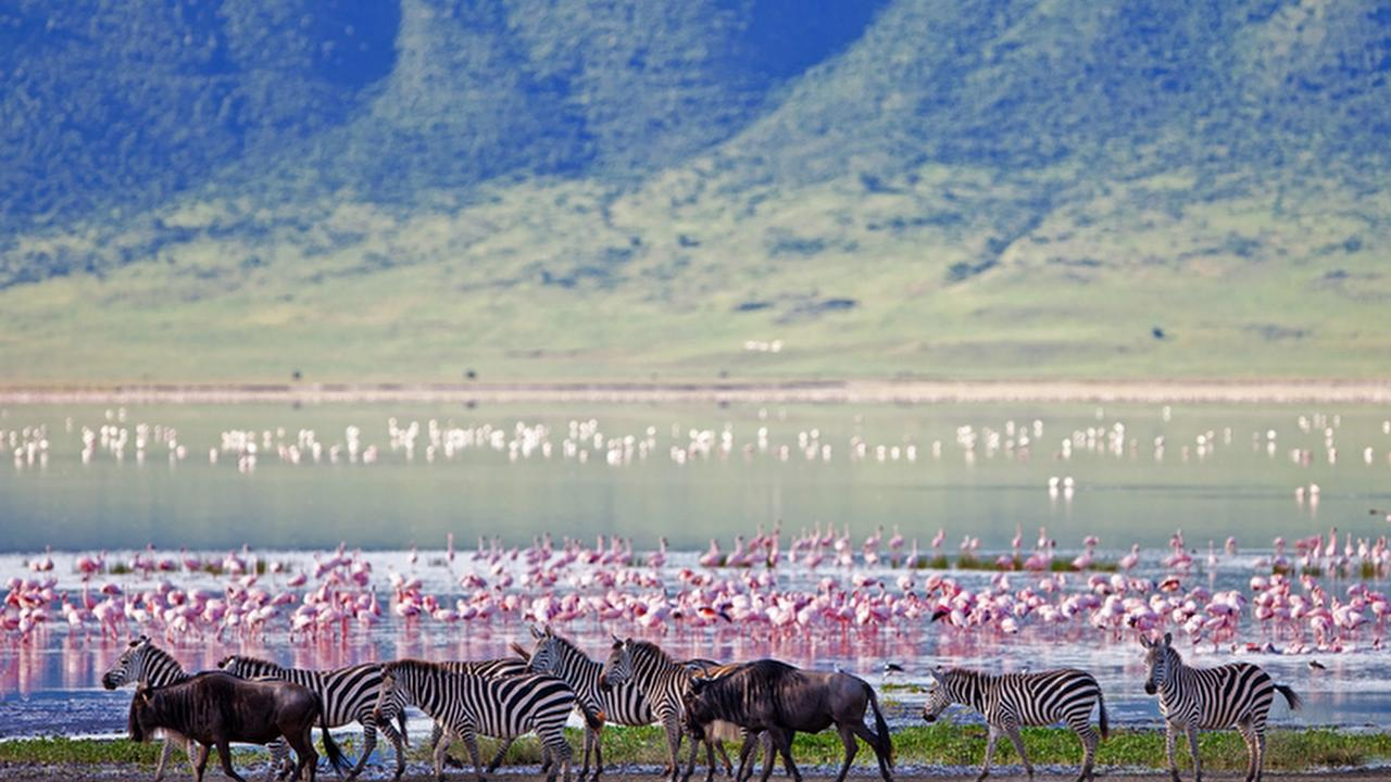 Profile picture of Ngorongoro Crater