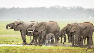 picture of Amboseli park
