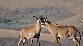 Picture of Nyika National Park