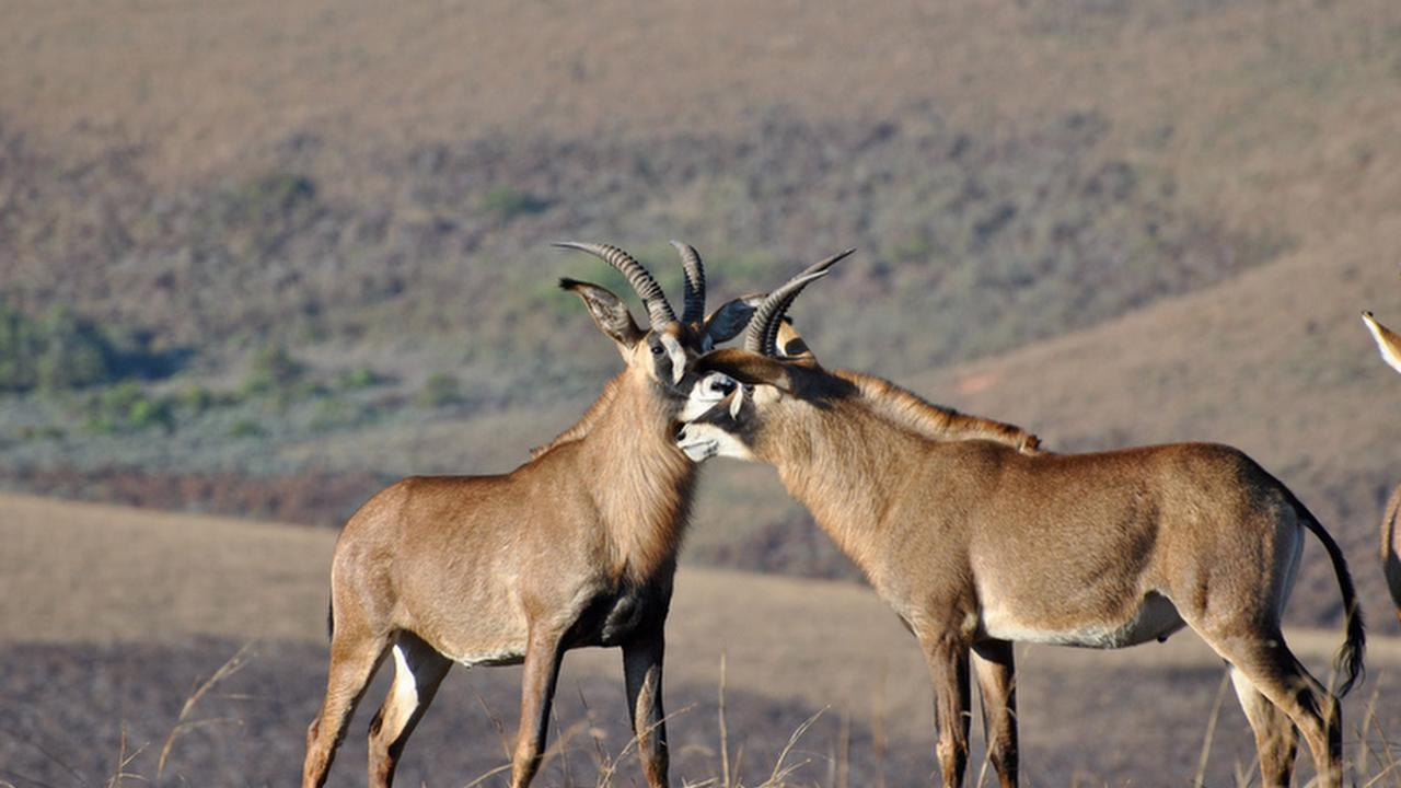 Profile picture of Nyika National Park