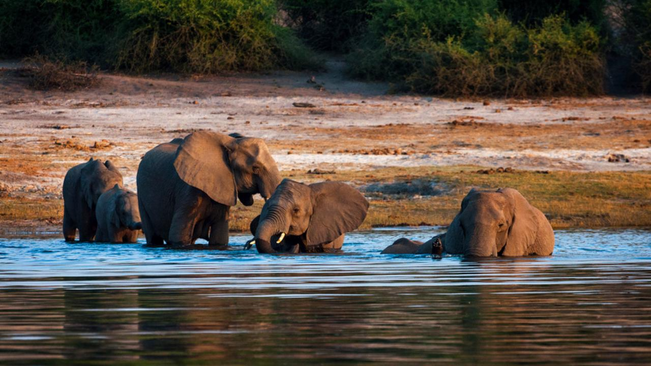 Profile picture of Chobe National Park