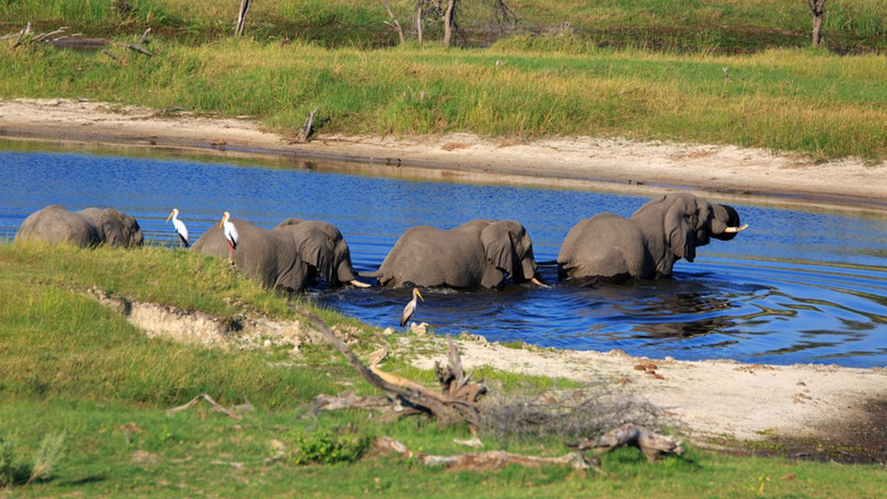 Profile picture of Nxai Pan National Park