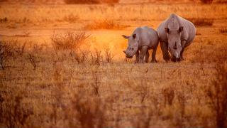 picture of Khama Rhino Sanctuary