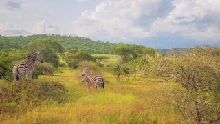 picture of Mbuluzi Game Reserve