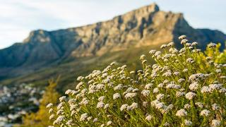 picture of Table Mountain National Park