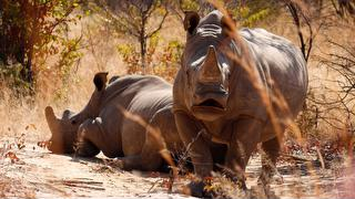 picture of Matobo National Park