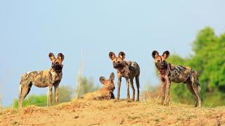 picture of Lengwe National Park