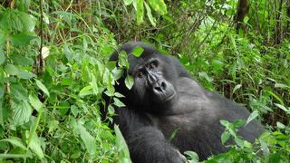 picture of Bwindi Impenetrable National Park