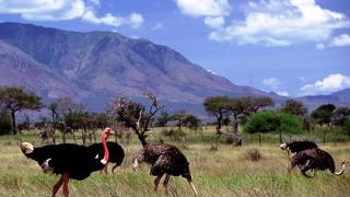 picture of Kidepo Valley National Park