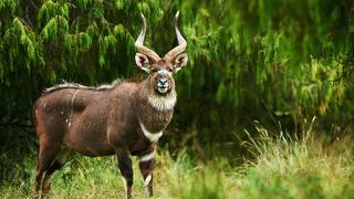 picture of Bale Mountains National Park