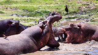 picture of Kafue National Park