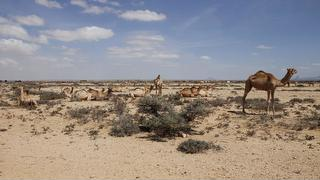 picture of Somaliland Travel