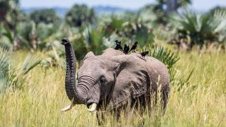 picture of Congo Discovery Safaris