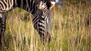 picture of African Safari Booking