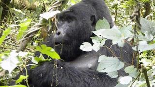 Tour picture - Primate Watch, Wildlife Holiday – 12 days