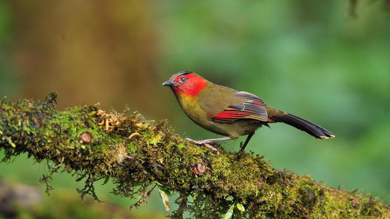 Profile picture for Bird Watching, Watching Rift Endemics 14 days