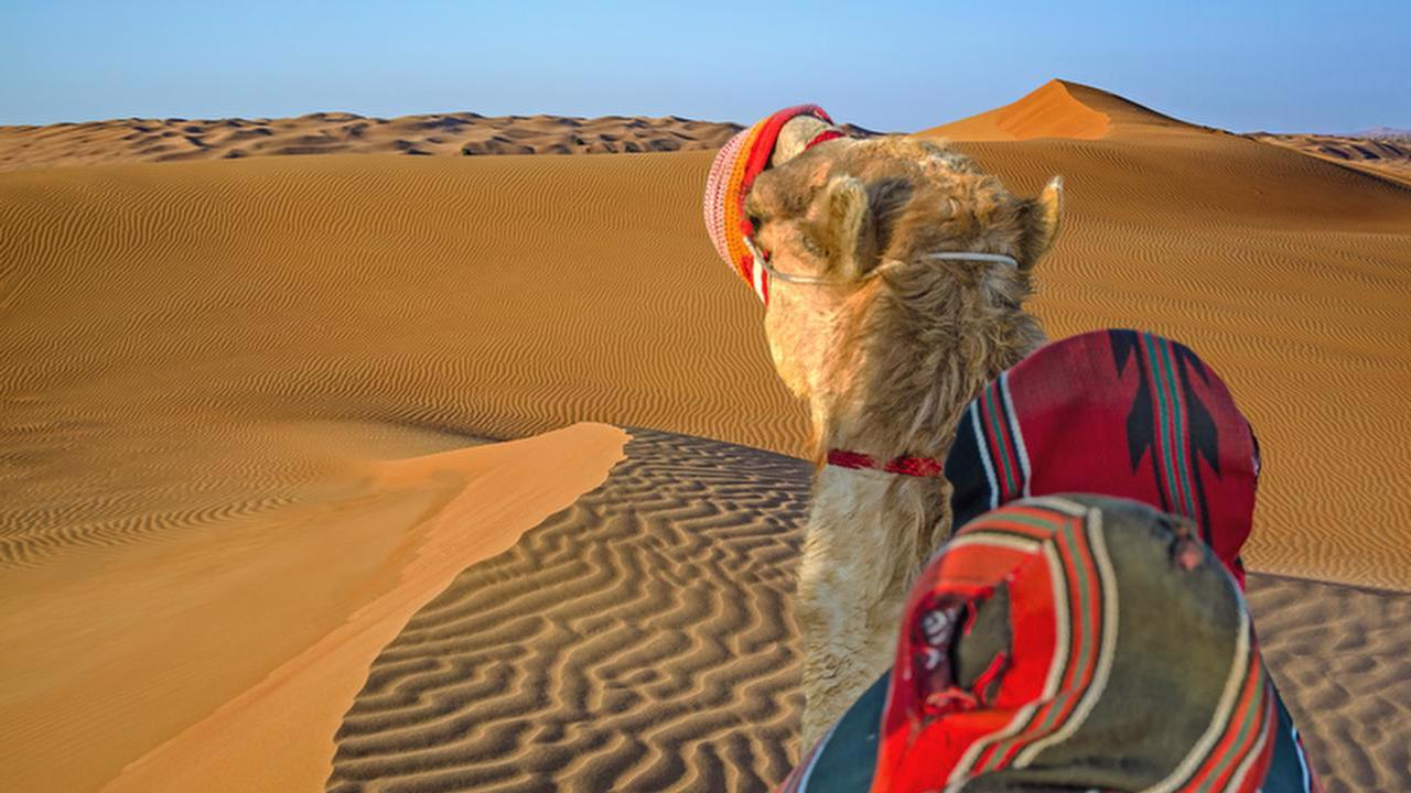 Profile picture for Camel riding adventure across the island of Meroe